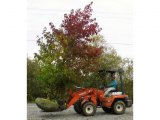 Color Sweetgum Kubota