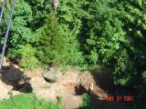 Sequoia tree flying across campus.