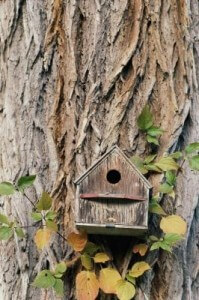 birdhouse on tree