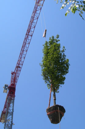 Big Trees Inc. Assists Homeowner with Difficult View Screening Situation