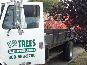 Big Trees Inc. Assists Private School with Tree Transplanting
