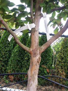 tree nursery Seattle