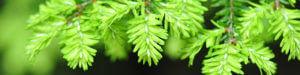 tree nursery Snohomish