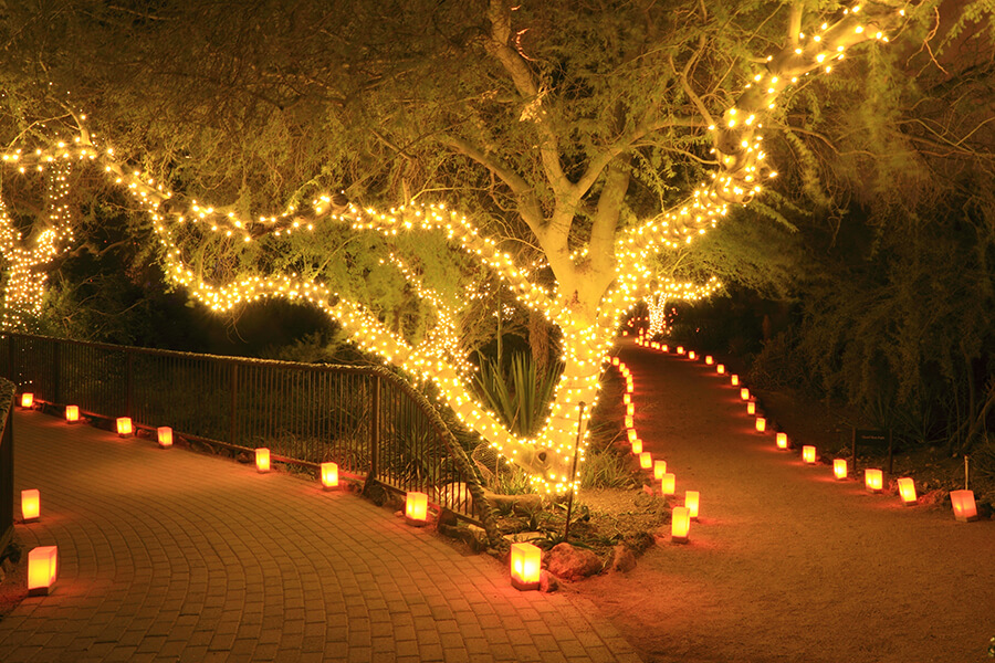 Keep Outdoor Tree Lights On Year Round