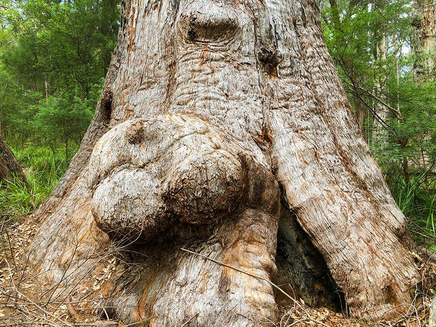Are Bumps on Trunks Bad for Trees?
