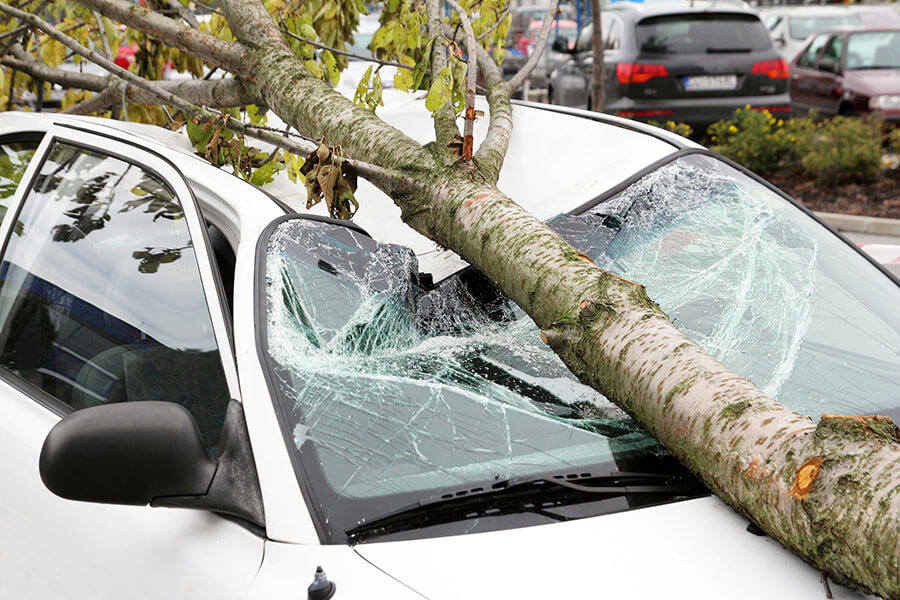 Why You Shouldn't Neglect Damaged Trees