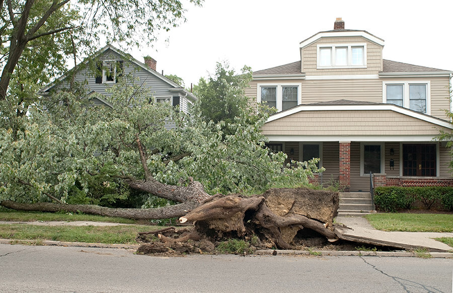 When Should You Have a Tree Removed from Your Property?
