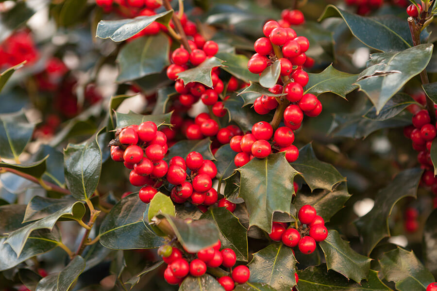 Get Some Winter Color by Planting These Trees
