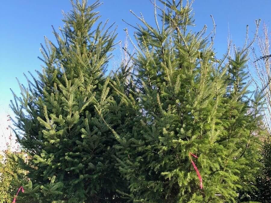 Tree Transplant Company Restores Local Landscape