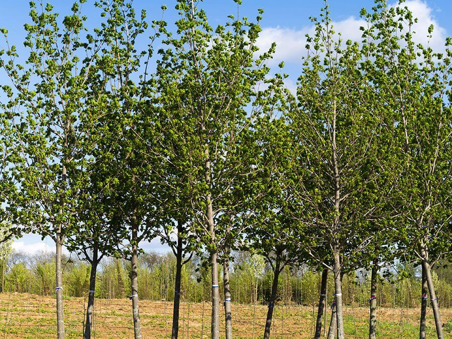 It's Not Too Late to Plant Your Trees!